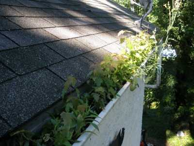 Gutters Growing a Garden